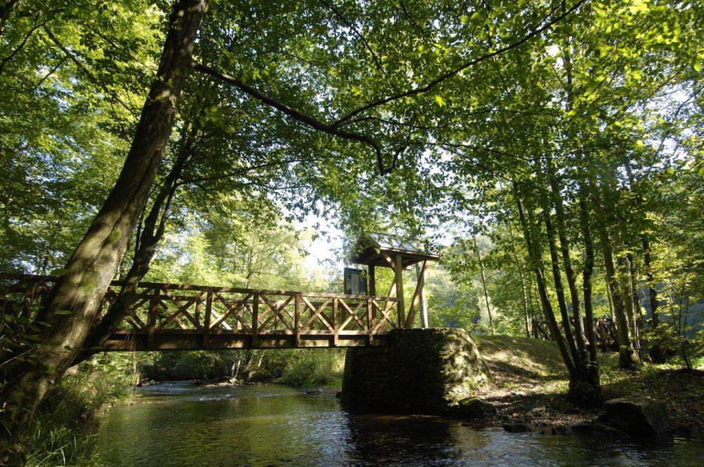 Idée de ressourcement : randonnée 100 % forêt en Ardenne pour sportifs