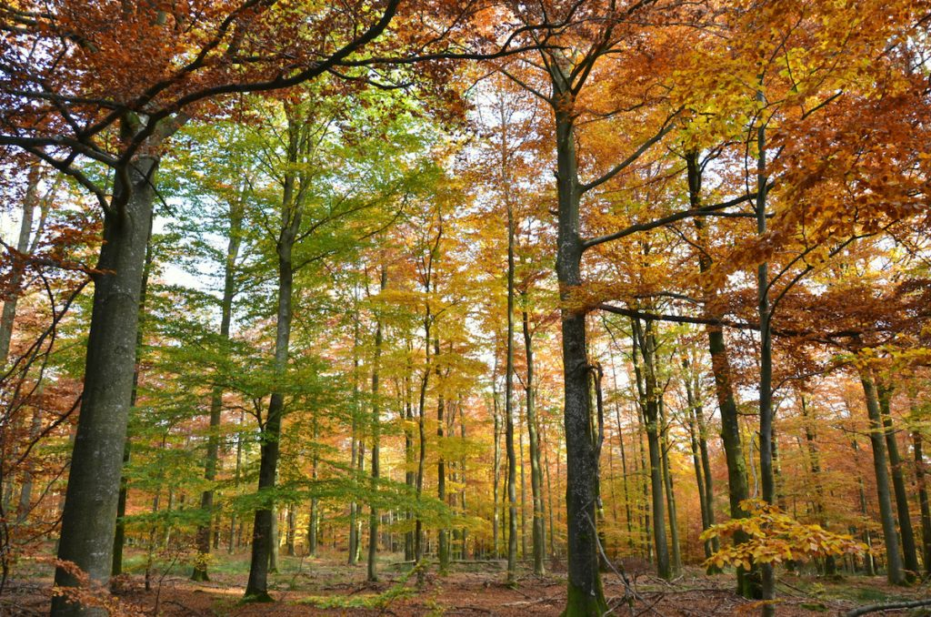 L'automne en Wallonie : des couleurs à ne pas manquer !
