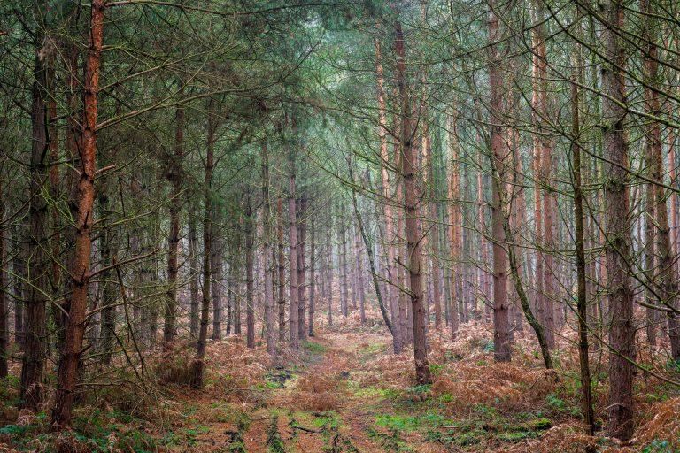 Cette célèbre forêt déborde de nudistes : « je n'ose plus y faire mon jogging ! »