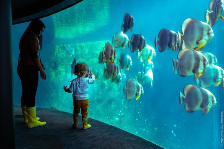 Een dag in Nausicaá, het grootste aquarium van Europa