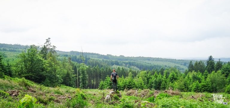 De Hoge Ardennen