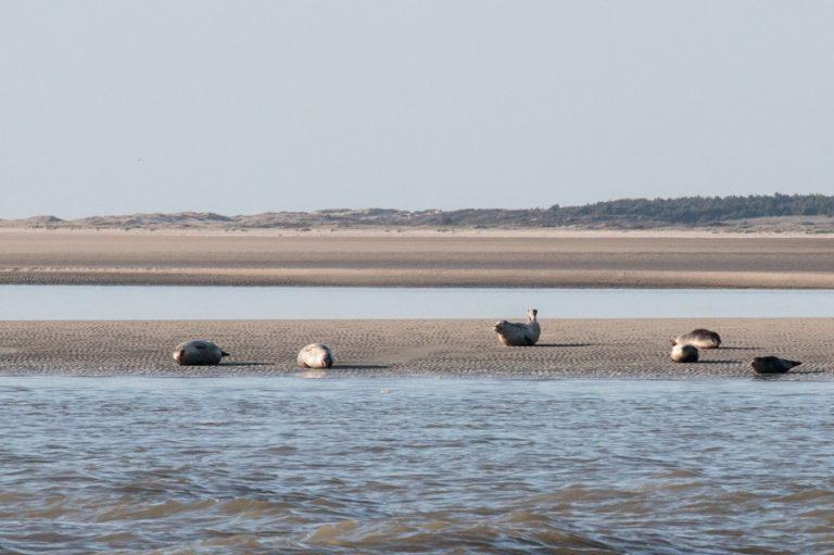 Rencontres inattendues : phoques et oiseaux migrateurs en Baie de Somme