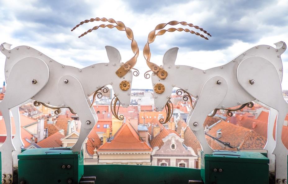 Poznan Goats