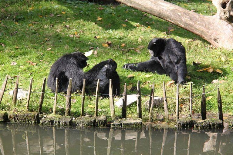 Natuur en exotische pause naar de zoo in het stadspark van Lille