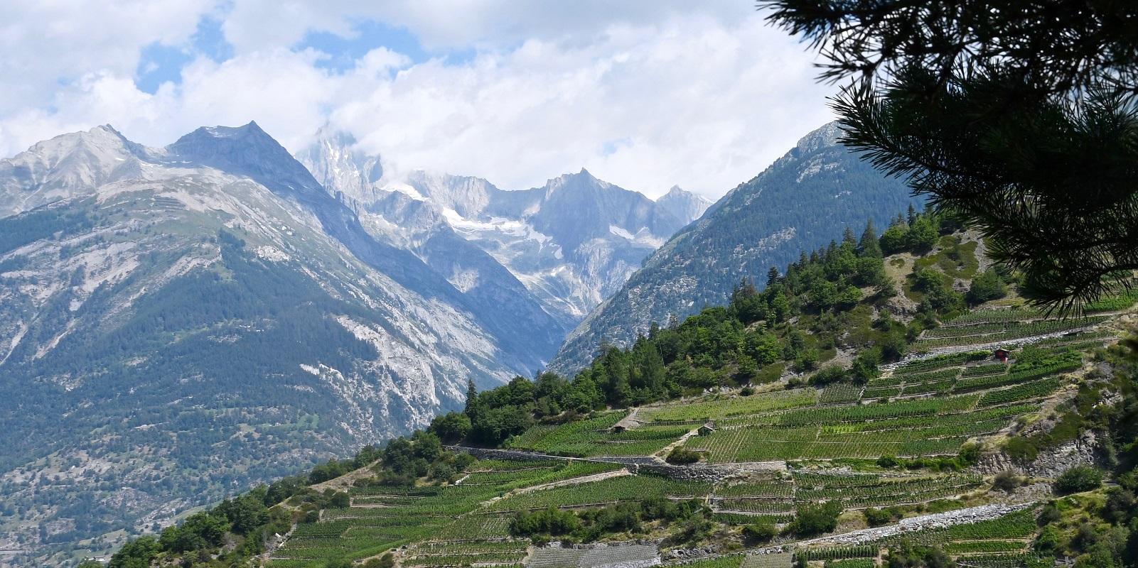 Visperterminen : Le plus haut vignoble d'Europe est en Suisse