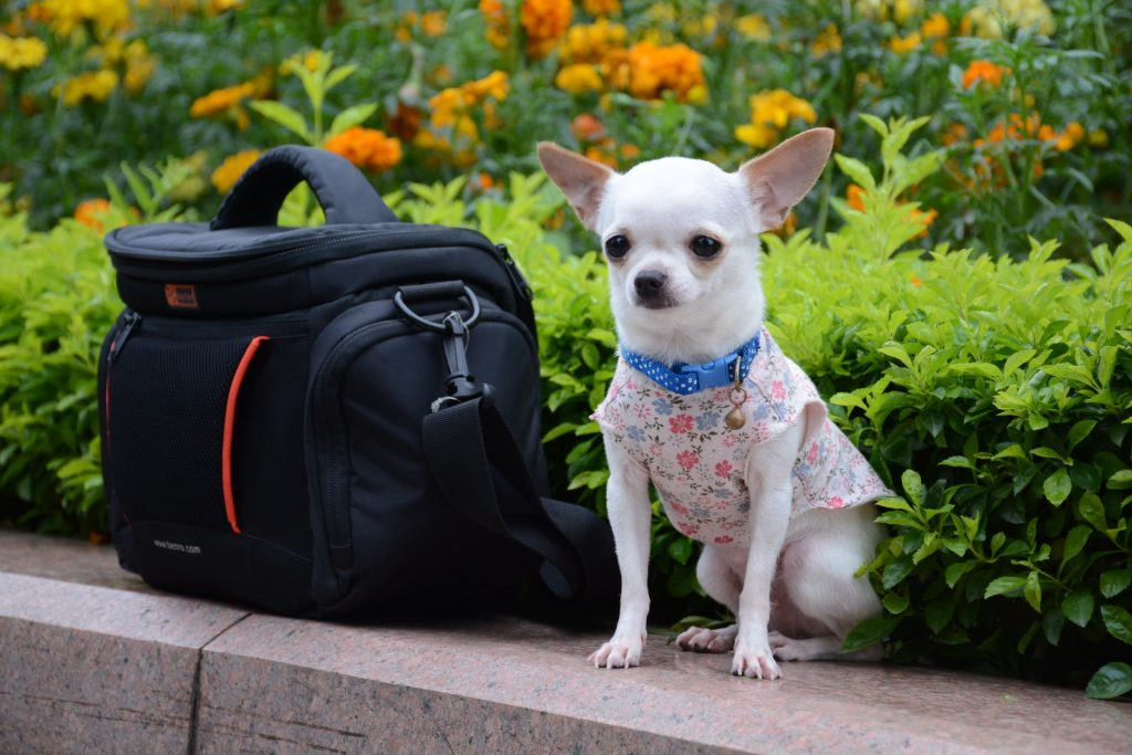 Partir en vacances avec un animal de compagnie : voici ce qu'il faut savoir.